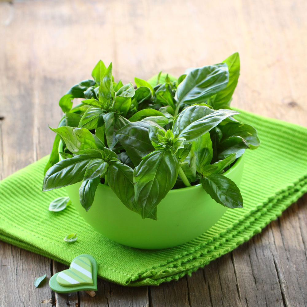 Basil, Pure Essential Oil