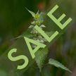 Extract Sale