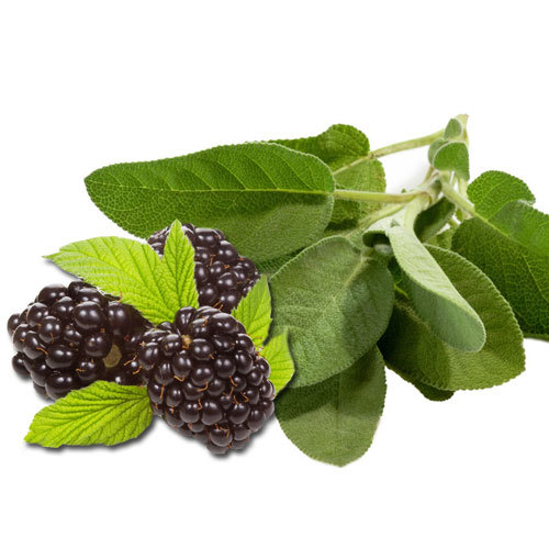 Blackberry Sage Cybilla Fragrance Oil