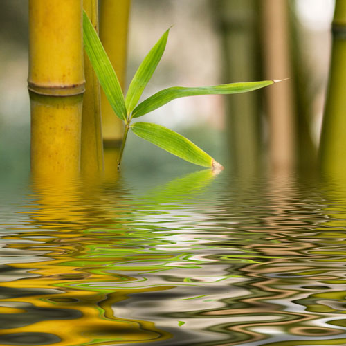 Fresh Bamboo Fragrance Oil