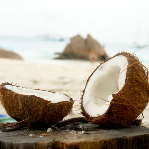 Island Coconut Fragrance Oil