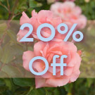 20% off Baby Rose FO