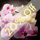 Rice Flower & Shea Cybilla
