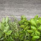 Sunny Herb Garden Fragrance Oil