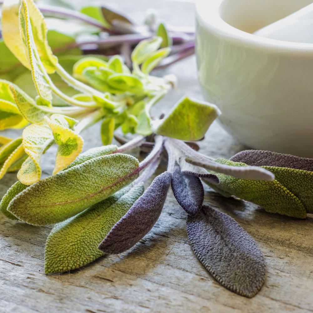 Sage, Dalmation Essential Oil