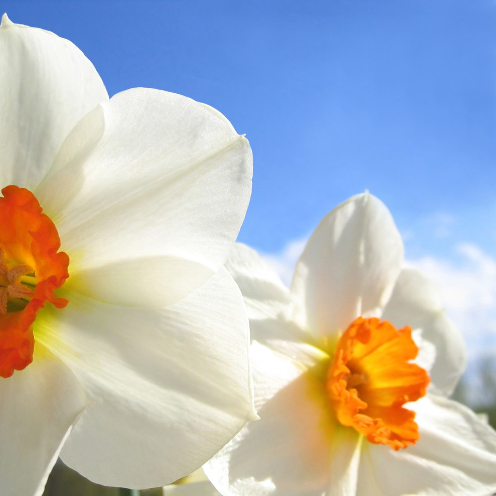 Ac Spring Fragrance Sampler