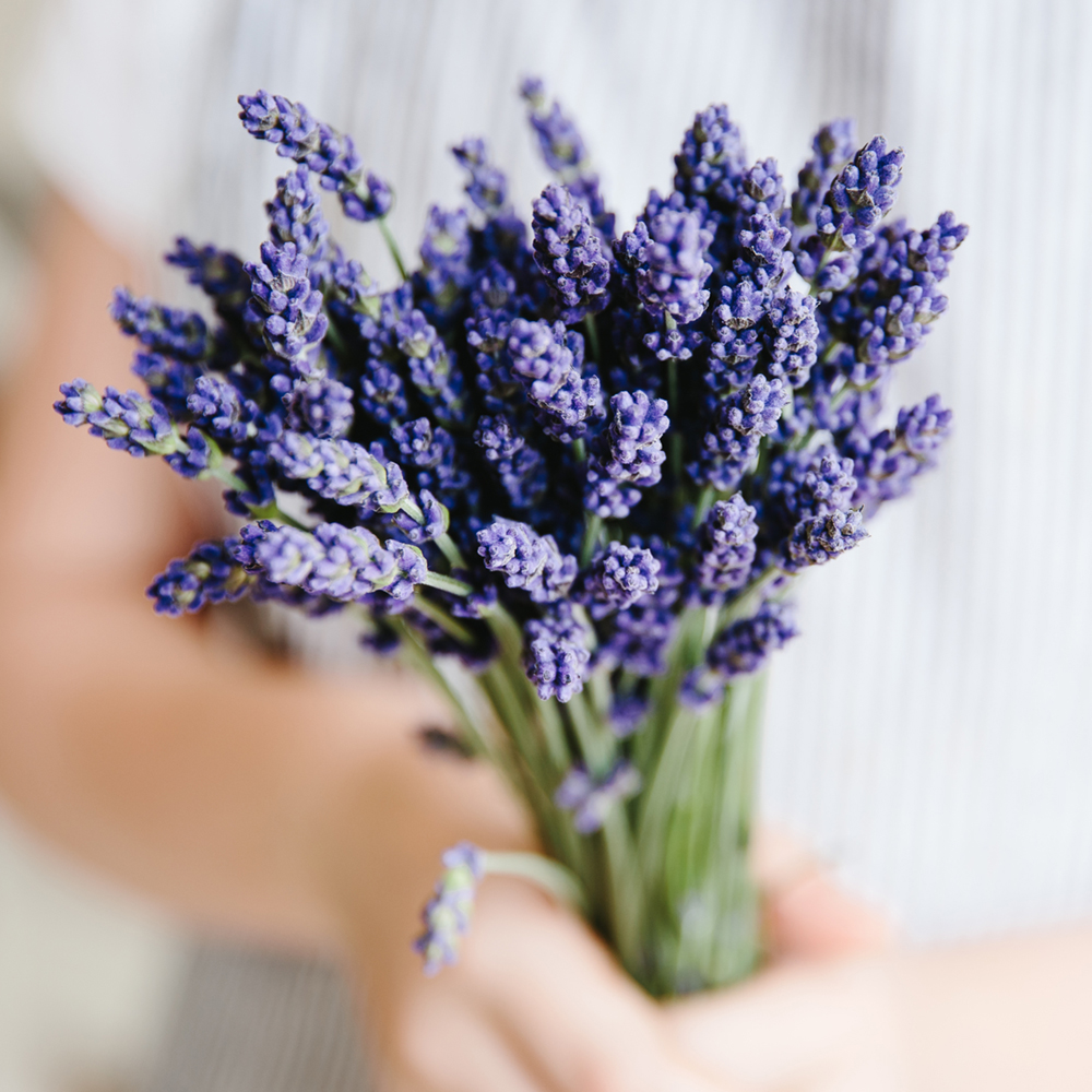 Lavender Fine Essential Oil