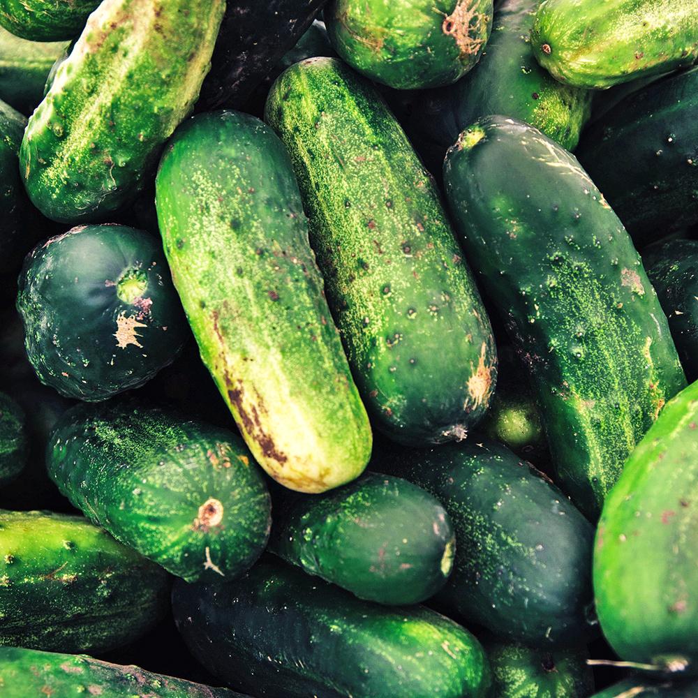 Cucumber Garden Fragrance Oil