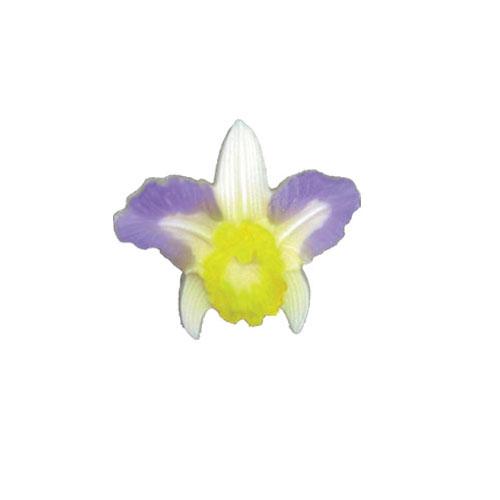 Aloha Orchid Mold