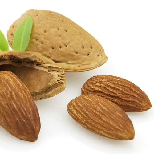 Almond Cybilla Fragrance Oil