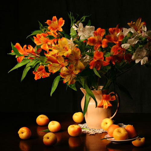 Apricot Freesia Fragrance Oil