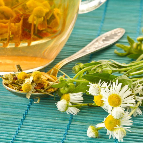 Chamomile Cybilla Fragrance Oil