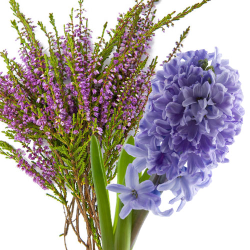 Heather And Hyacinth Fragrance Oil